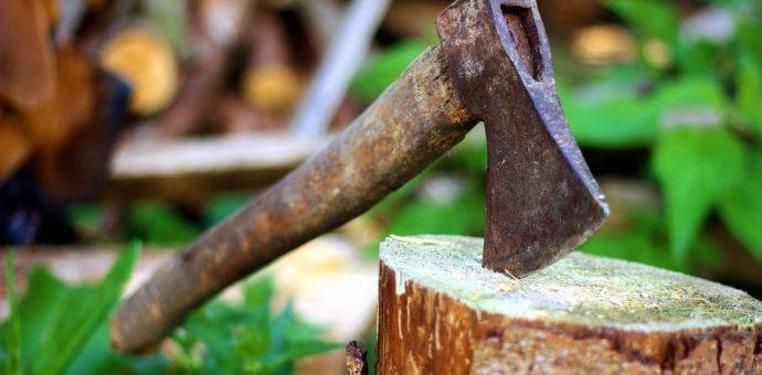 Koniec z samowolną wycinką drzew? Przepisy znowu będą zaostrzone.