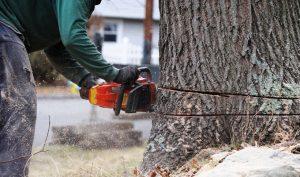 wycinanie-drzew-359678-article