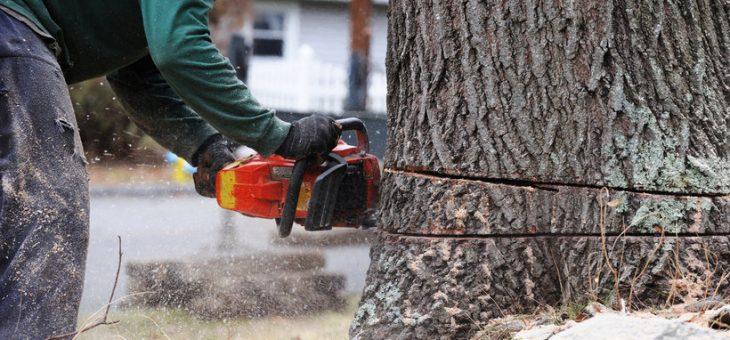Wycinka drzew na własnych działkach od 1 stycznia 2017 r. bez zezwolenia