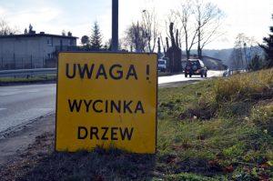 wycinka_drze2